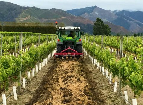 Cultivation Vineyard Marlborough