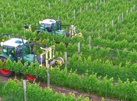 Defoliators - Vineyard Contracting Services, Marlborough