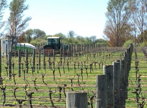 Spraying Vines, Blenheim