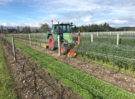 Sward Management Marlborough